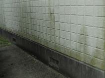 外壁塗装 諫早市 大村市 外壁 コケ カビ 劣化診断